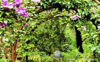 Металлическая садовая арка: как сделать долговечный декор для сада своими руками