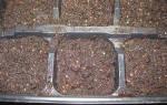 Алиссум — выращивание из семян: когда сажать и каким способом, популярные сорта растения, дальнейший уход