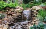 Водопад: растения для декорирования водной и прибрежной зоны