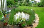Как правильно выбрать место для пруда – рекомендации для грамотного обустройства