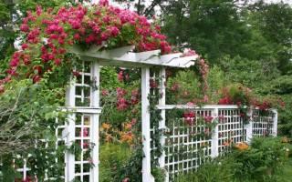 Деревянная садовая арка своими руками: интересные идеи для сада и этапы строительства