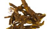 Шлемник байкальский при гипертонии: лечебные свойства и секреты выращивания