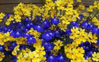 Ампельные растения для сада: примеры подвесных композиций
