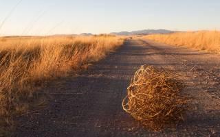 Северные олени признаны вымирающими