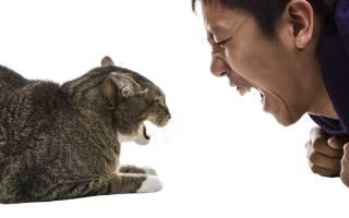 Кошки окружили маленькую кобру и нападают