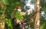 Как лечить повреждённые деревья, рекомендуемые средства