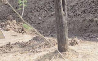 Есть ли на фотографии леопард или нет