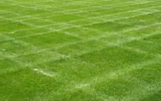 Как сделать газон на даче, советы по уходу