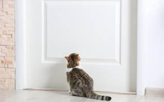 Кот закрылся в квартире, поэтому пришлось выламывать дверь