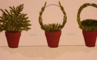 Создание зеленых скульптур из растений