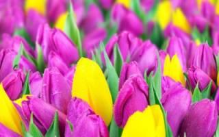 Посадка цветов осенью — тюльпанов, нарциссов, гиацинтов — советы дачникам