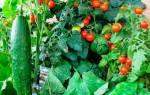 Оригинальные идеи для легкого выращивания овощей