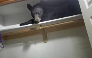 Медведь пришёл в дом американца и устроил беспорядок