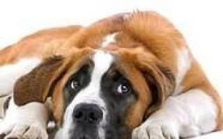 Ранее диагностирование рака с помощью собак