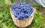 Подкормка винограда весной: виды удобрений, советы для начинающих