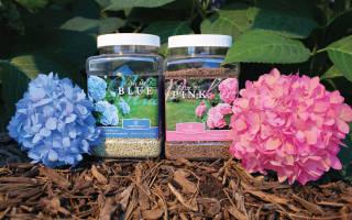 Чем подкормить гортензию (в том числе в июне, июле) — удобрения для пышного цветения