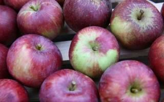 Описание сорта яблони Спартан — особенности, правила посадки и ухода, сбор урожая + фото