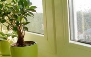 Комнатные растения осенью и зимой: как ухаживать, поливать, всё о климате и правильном освещении + Видео
