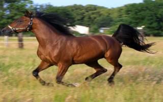 Чтобы не катать на себе человека лошадь падает и притворяется мёртвой