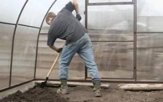 Белокрылка в теплице – как избавиться и чем обработать землю