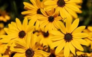 Как цветы в саду поднимают настроение и почему
