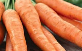 Морковь Королева осени — описание сорта, особенности выращивания + фото и отзывы