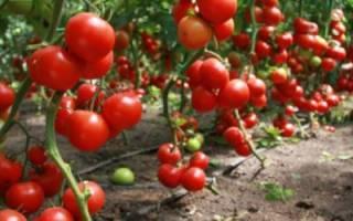 Как спланировать грядки на огороде: посадки в круглых грядках, как рассадить овощи