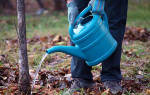 Нужно ли поливать яблони осенью, как и когда именно следует это делать