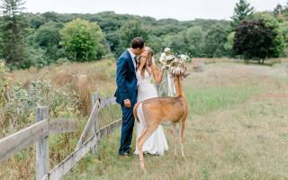 Олень пришёл на свадьбу и попал на фотографии