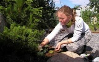 Уход за почвой на садовом участке: методы природного земледелия