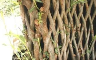 Живая изгородь из ивы: как сделать оригинальный забор на даче своими руками