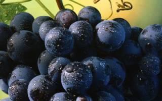 Размножение винограда: способы, как подготовить почву и лозу, как утеплять в зиму