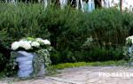 Обрезка живой изгороди: как правильно ухаживать за зеленым забором