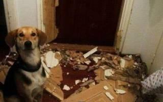 Видео как собаке одели очки и ободок