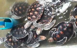 В Таиланде черепаху освободили из пакета