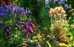 Подбираем многолетние цветы для оформления клумб и цветников