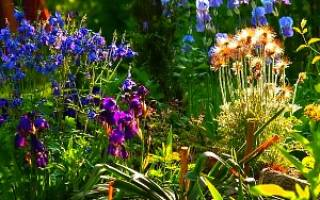Многолетние цветы для оформления клумбы: выбираем неприхотливые многолетники для цветника