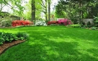 Уход за газоном по сезонам: подкормка, подсев, полив, стрижка