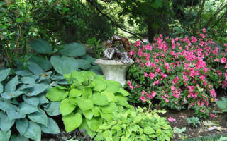 Как пурпурные и светлолистные растения влияют на восприятие пространства