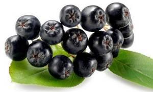 Болезни и вредители красноплодной и черноплодной рябины