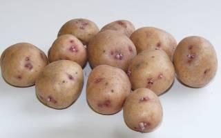 Картофель сорта Аврора: описание и характеристика, преимущества и недостатки, посадка и уход + фото и отзывы