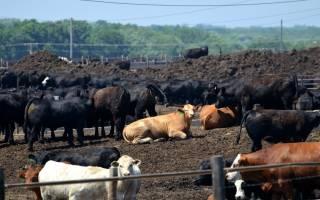 Какие удобрения выбрать для почвы: конский навоз или коровяк, что лучше?