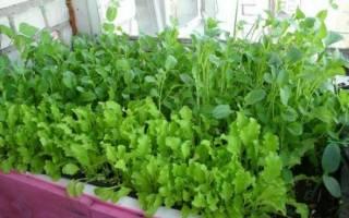 Выращивание овощей и зелени на подоконнике: выбор сортов, посадка и правильный уход