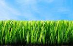 Почва на даче: от чего зависит плодородие почвы и способы его улучшения