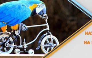 Попугай научился ездить на велосипеде
