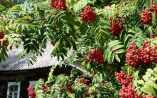 Какие деревья нельзя сажать возле дома: объективные причины и приметы