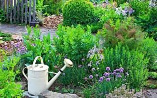 Какие пряные травы можно посадить в цветнике