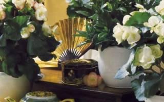 Озеленение интерьера в дачном доме: какие растения выбрать, идеи