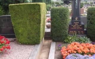 Какой кустарник посадить на кладбище: обзор с фото и описаниями