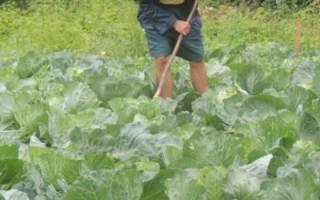 Уход за почвой: как правильно весной, летом, осенью и зимой, подготовка под грядки и удобрение